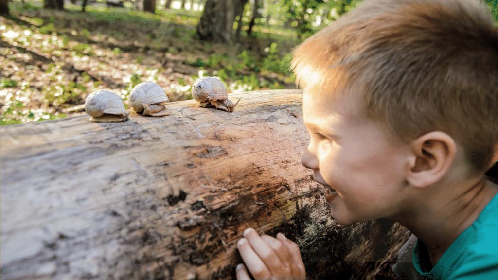 dreng leger med snegle paa en traestamme